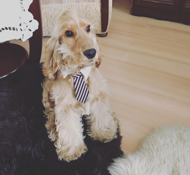 A business dog in a tie