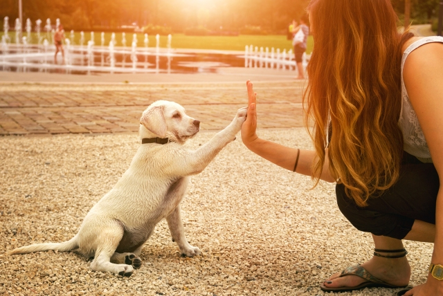 Dog giving a high five with good lighting
