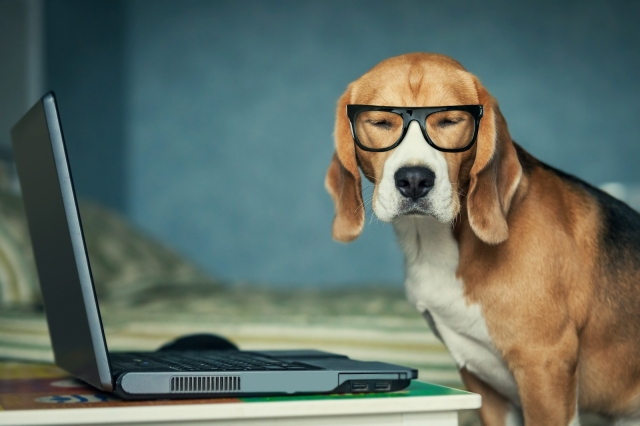 Dog on a laptop wearing glasses