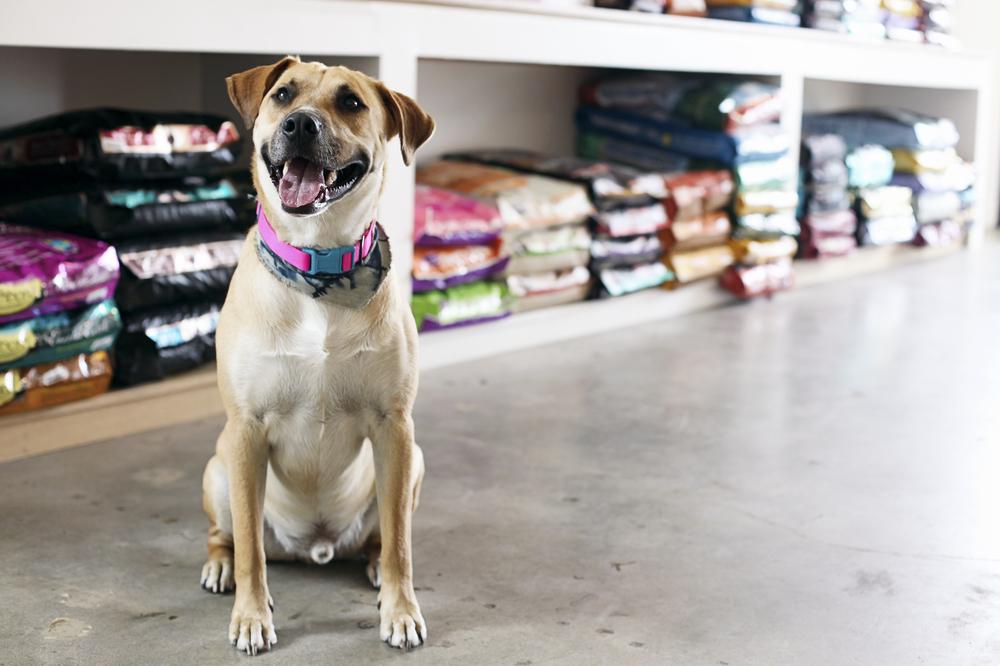 The 3 Plugins for Small Business that Every Pet Store Needs